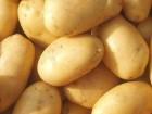 Картофель молодой Ривьера