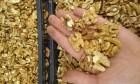 продам ¤дро грецкого ореха