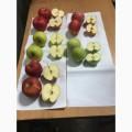 ѕродам яблока ќптом ! —емеренко, 'лорина, √олден, Ёлиза, јйдаред.