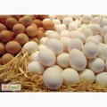 Продажа яиц оптом