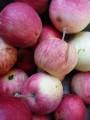 Куплю яблука