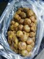 Куплю прополіс постійно 750 грн/кг