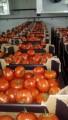 Куплю оптом помидоры от 20 тонн