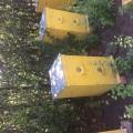 Продам пчелосемьи, пчелы с ульями, уликами, 20 семей