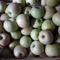 ѕродам яблоки
