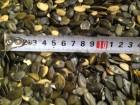 Семена тыквы голосеменная 16.8 тонн. Срочно.
