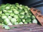 Продам капусту оптом з поля