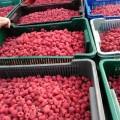 Продаю саджанці малини