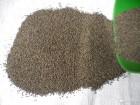 Семена клевера магниченногоне магниченного