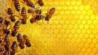 Продам мед білої акації