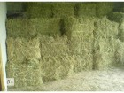 Реализуем сено люцерны
