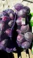 Продаем краснокачанную капусту оптом