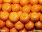 Продаем турецкие качественные мандарины оптом
