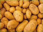 Продам большую картошку хорошего качества. Оптом и в розницу.
