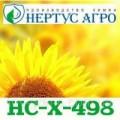 Продам гібрид соняшника Нертус-Агро НС-Х-498