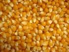 Услуга сушки кукурузы