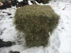 Продам сено тюкованное, луговое, 40тонн в наличии, клевер-тимофеевка