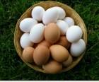 ѕродам яйца куриные