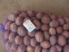 Продаю картофель посадка или бюджетный вариант на рынок.  беларосса