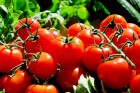 Гумат калия  для томатов и перцев