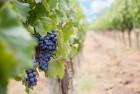 Органоминеральное удобрение для винограда