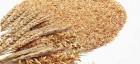 Купимо пшеничні висівки