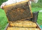 покупаем пчел в зиму ( пчелосемьи, пчелопакеты)