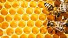 Продам пчелок