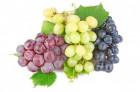 Куплю виноград по выгодным ценам! крупными партиями.