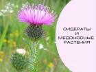 Семена сидератов и медоносных растений
