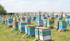 ѕродам пчелосемьи