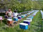ѕродам бджоломатки карпатки приймаю замовленн¤ на весну 2019
