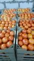 Томаты продам, томаты свежие, помидоры