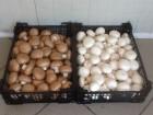 Купим грибы свежие.