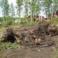 Розкорчування старих садів