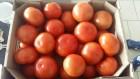 Продам помидор тепличный стандарт производство Украина