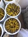 Огірки солоні - огурцы малосольные - Купить огурцы соленые. Опт