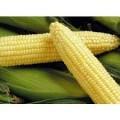 Купим кукурузу в порту, на элеваторе и с места