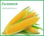 Семена кукурузы Галатея ФАО 260