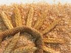 Закупаем Отруби пшеничные, Мучки, Макуху, Сою, Жмых