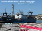 Крымский Анчоус-Хамса 24 часа оптом от 20 тонн СРТМ-к Керчь
