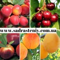 —аженцы крупноплодных сортов персика, нектарина, абрикоса,барбарис