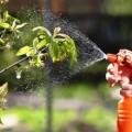Большой выбор средств защиты растений и стимуляторов роста.