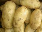 Продам картошку со своего огорода, санте белая, отличное качество!