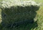 Продаю сено люцерна в тюках