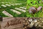 """Ферма по розведенню равликів Tante Snails """"під ключ"""""""