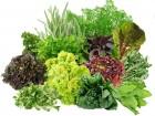 Продам зелень в ассортименте на экспорт