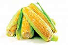 Закупаем кукурузу. Валюта. BG Trade SA,  Швейцария.