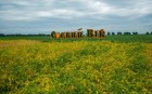 Продаж високоякісного посівного матеріалу сої, кукурудзи, пшениці.