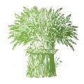 Пропонуємо насіння гречки сорту: Воля 1 репрод.
